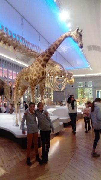 Visite du Muséum d'Histoire Naturelle de Bordeaux avec les élèves de 6ème !